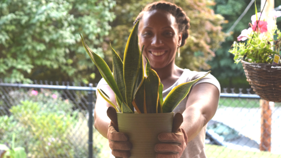How to Pot Your First Houseplant